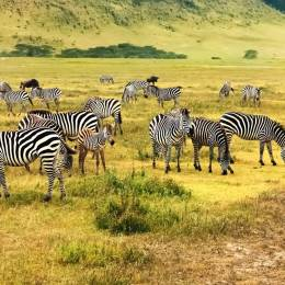 Best time to safari in Africa