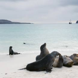 Sea Lions playing on the beach