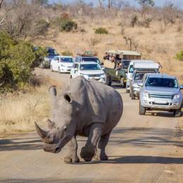 Enchanting Travels Guest - Traveled to South Africa - White Rhinoceros, Kruger National Park - Rebecca Cory
