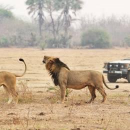 Enchanting Travels - Kenya Tours-Wildlife-Safari