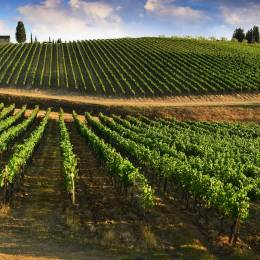 Beautiful landscape of Vineyards in Tuscany. Chianti region in summer season, Italy, Europe