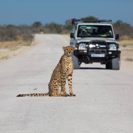Etosha national park namibia, best road trips