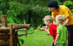 Eine Frau füttert zusammen mit zwei Kindern einen Elefanten