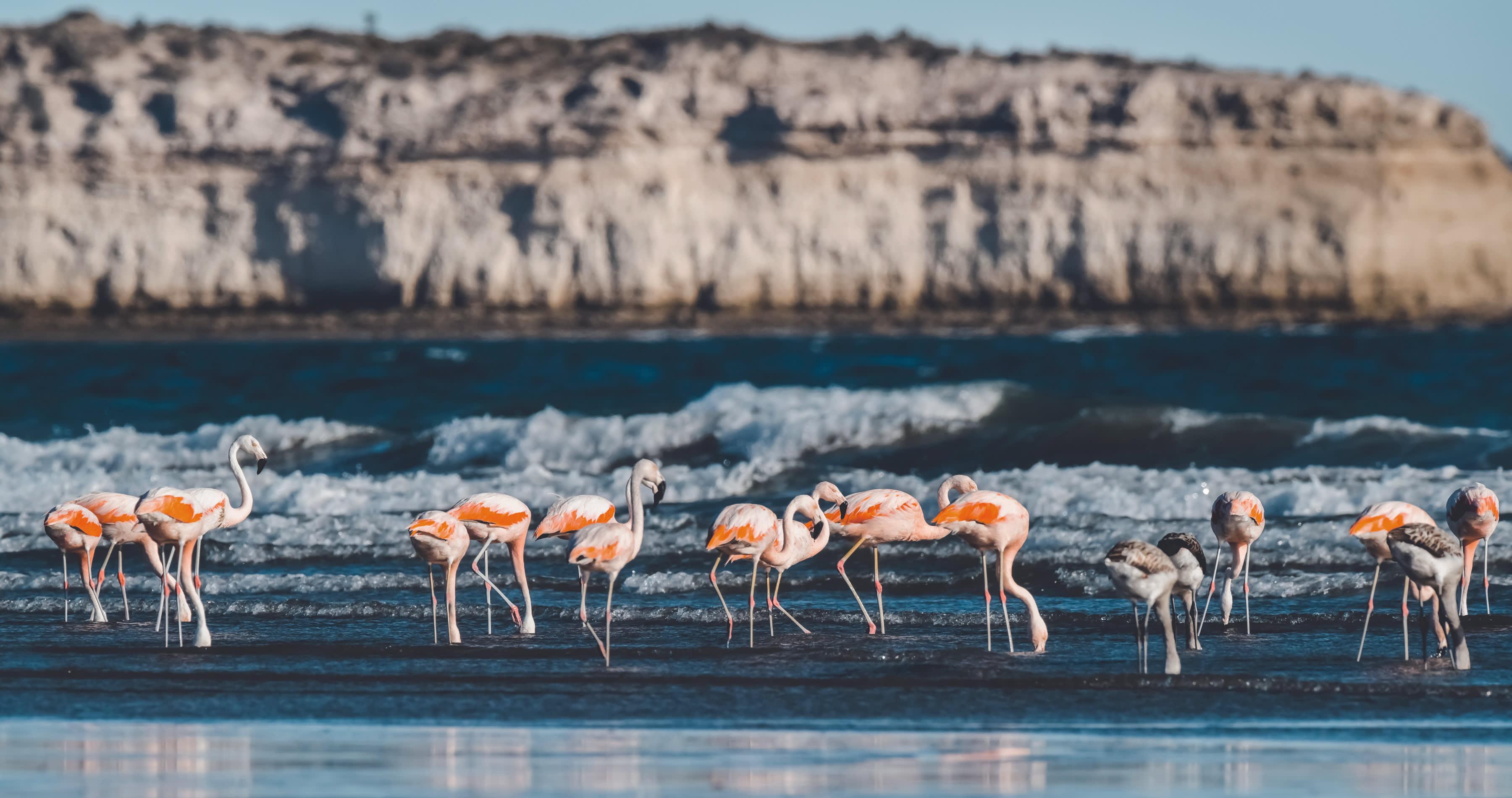 Argentinan flamingos - responsible travel 2021