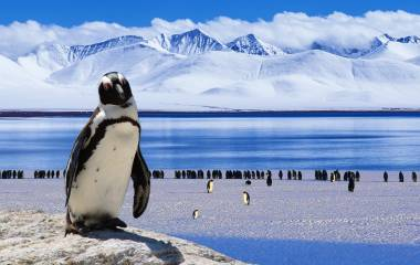 Enchanting Travels Antarctica Tours Penguin