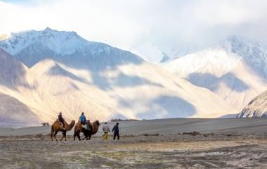 Camel riding at Hundar Village in Himalaya, Nubra Valley, Leh Ladakh, Jammu and Kashmir, India