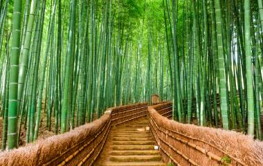 Kyoto, Japan at the Bamboo Forest Asia