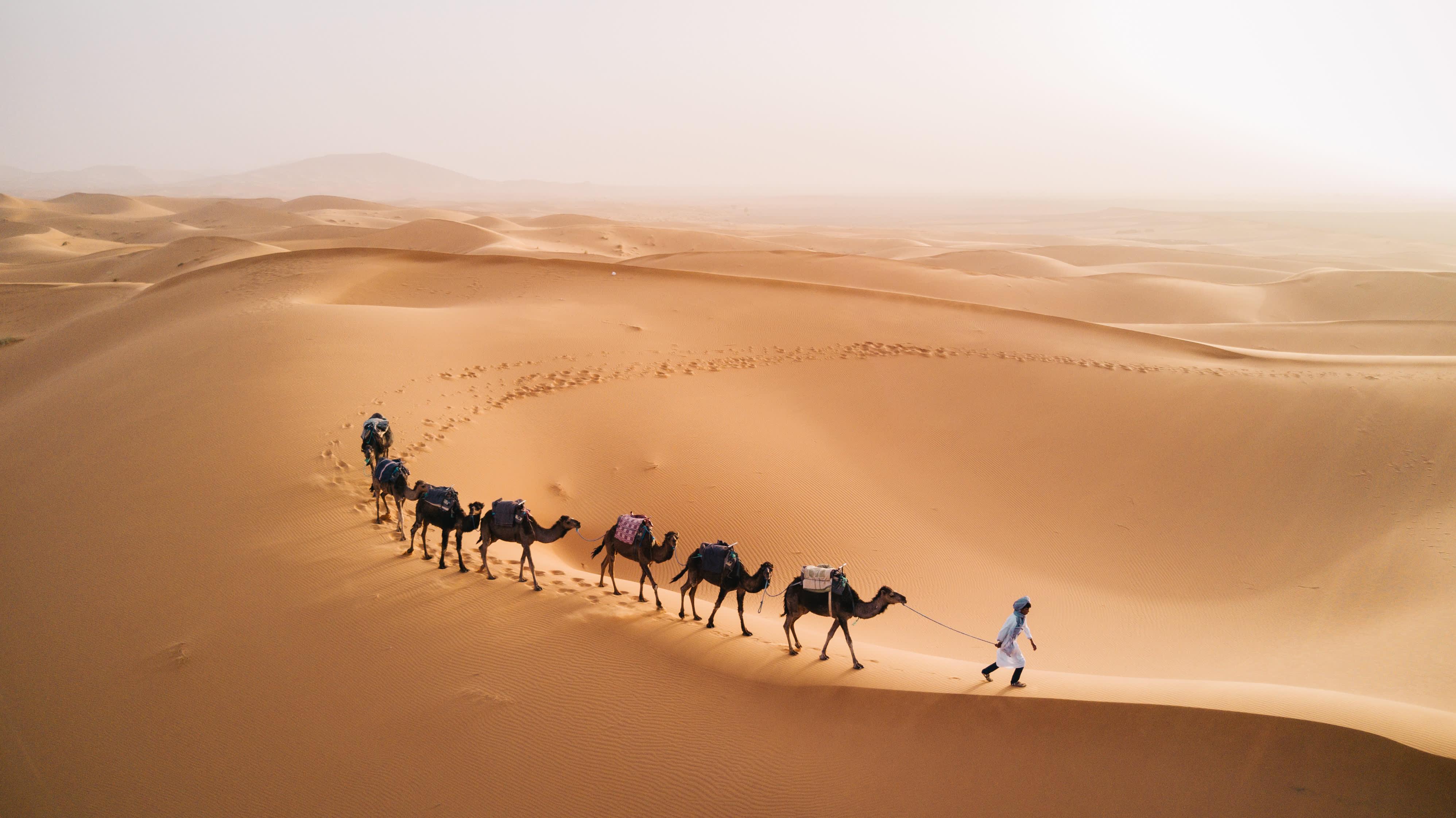 Tuareg with camels walk thru the desert on the Sahara Desert in Morocco.