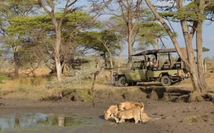 Löwen beobachten im westlichen Serengeti, Tansania