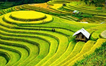 Kleine Hütten inmitten der Reisterrassen von Mu Cang Chai in Vietnam
