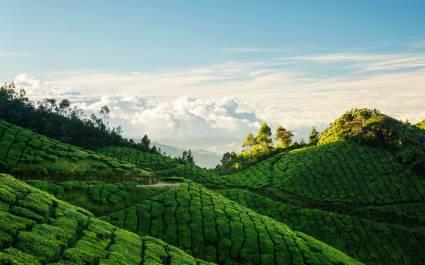 Enchanting Travels India Tours South India Blog Munnar