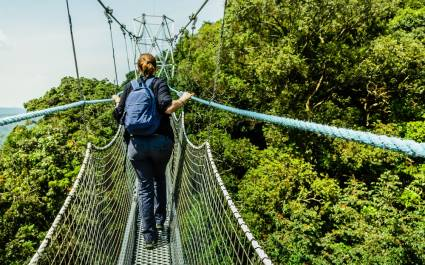 Canopy walk in Rwanda's impenetrable forest - best places to visit in 2019