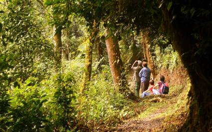 Birdwatching tours in Rwandan forests - best places to visit in 2019