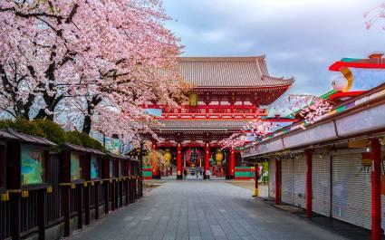 Blick auf den Sensoji-ji-Tempel und Kirschbäume in Tokio, Japan