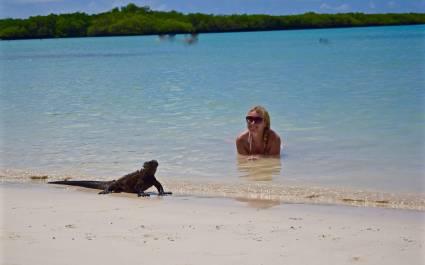 Eine Frau im Wasser beobachtet eine am Strand vorbeigehende Meerechse, Galapagos-Inseln
