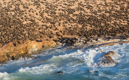 Atlantic ocean sea lion colony at the Namibian Skeleton coast