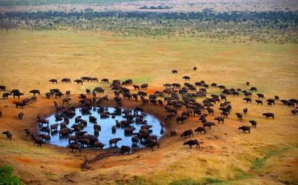 Luftaufnahme von Büffelherde an einer Wasserstelle in der Masai Mara, Afrika