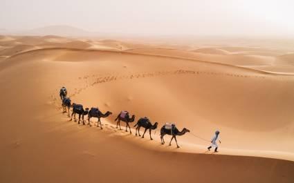 Einzelner Touareg geht mit Kamelen durch die unendliche Wüstenlandschaft der Sahara in Marokko