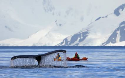Humpback whale tail with a kayak in the background, Antarctica vacation - Things to do in Antarctica