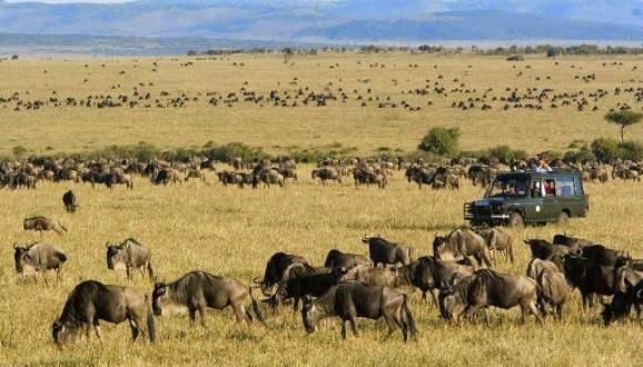 Touristen beobachten Tiere bei einer Jeep Safari in der Savannenlandschaft
