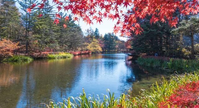 Herbst in Japan mit einen traumhaften Anblick gefärbter Blätter
