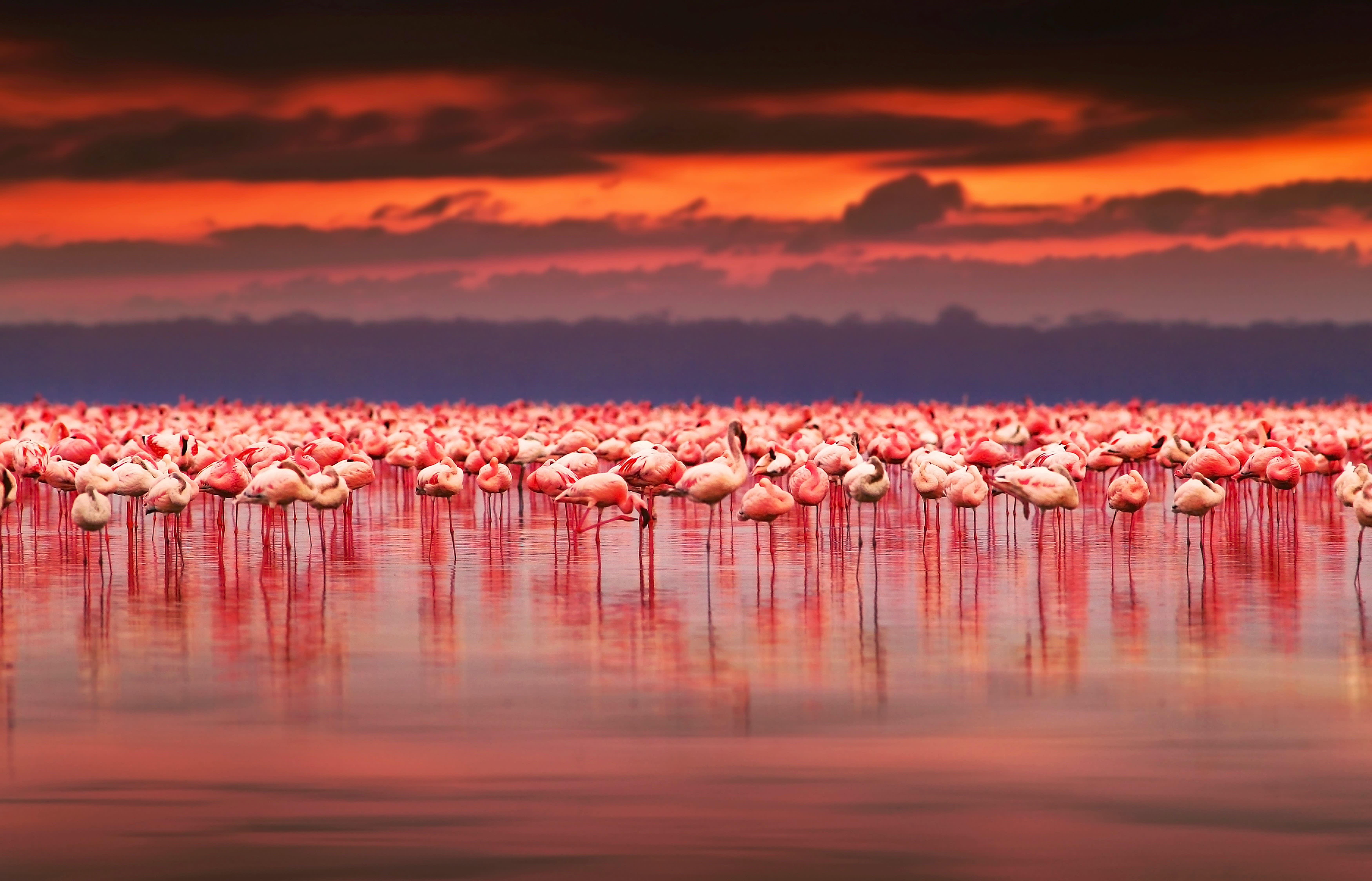 Flamingos am Lake Nakuru