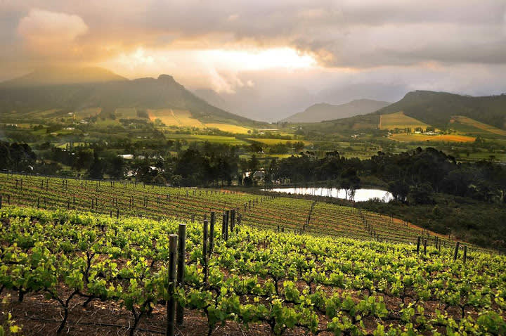 Cape Winelands panorama with Enchanting Travels