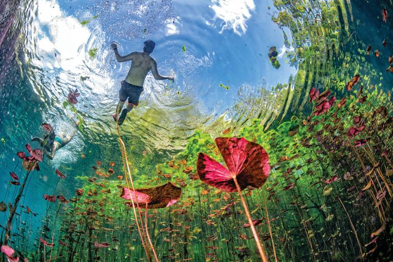 Virtual Travel Videos: Underwater gardens and water plants in Mexico cenotes cave diving