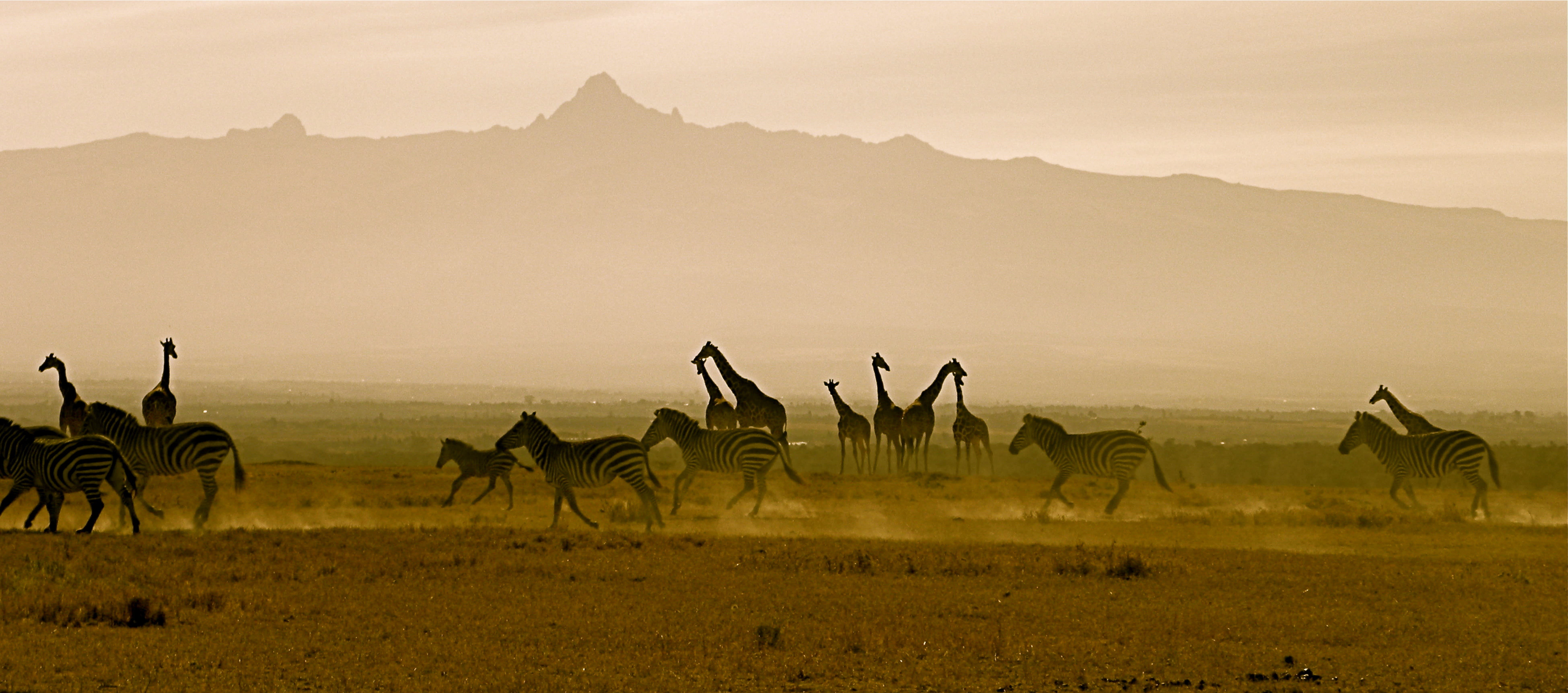 Safri in Kenia, Giraffen