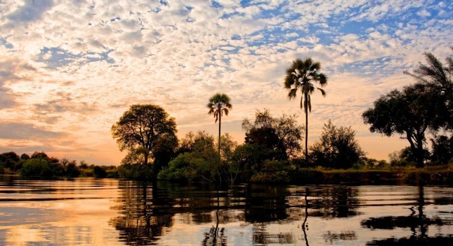 Sonnenuntergang - Palmen in der Lower Zambezi