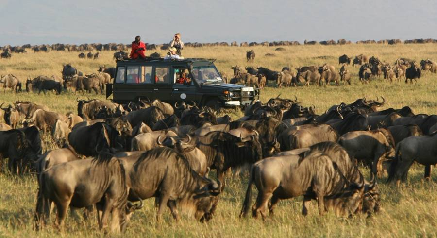 Africa makes a great honeymoon destination as you can witness the great migration.