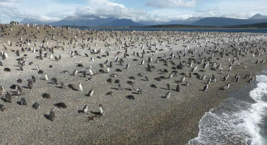 Pinguine aus nächster Nähe bewundern