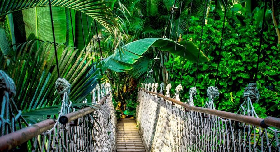 Hängebrücke, die zu einem Baumhaus führt