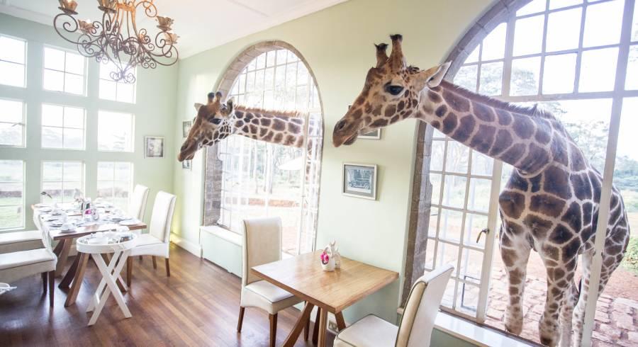 Giraffe Manor in Kenya