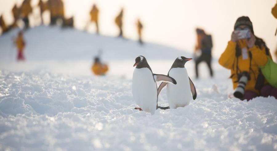 Enchanting Travels Antarctica Tours Penguins