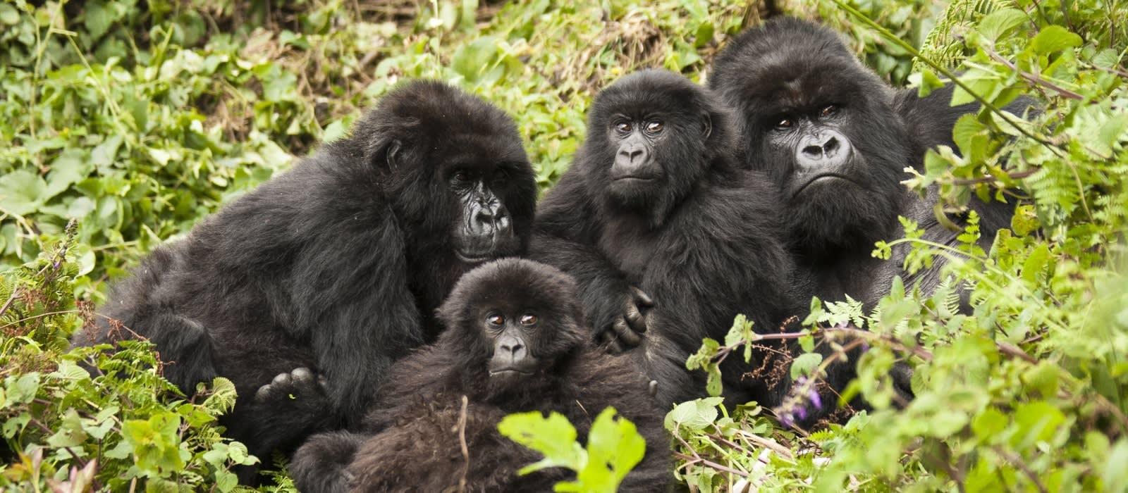 Tailor Made Kenya And Rwanda Safari Enchanting Travels