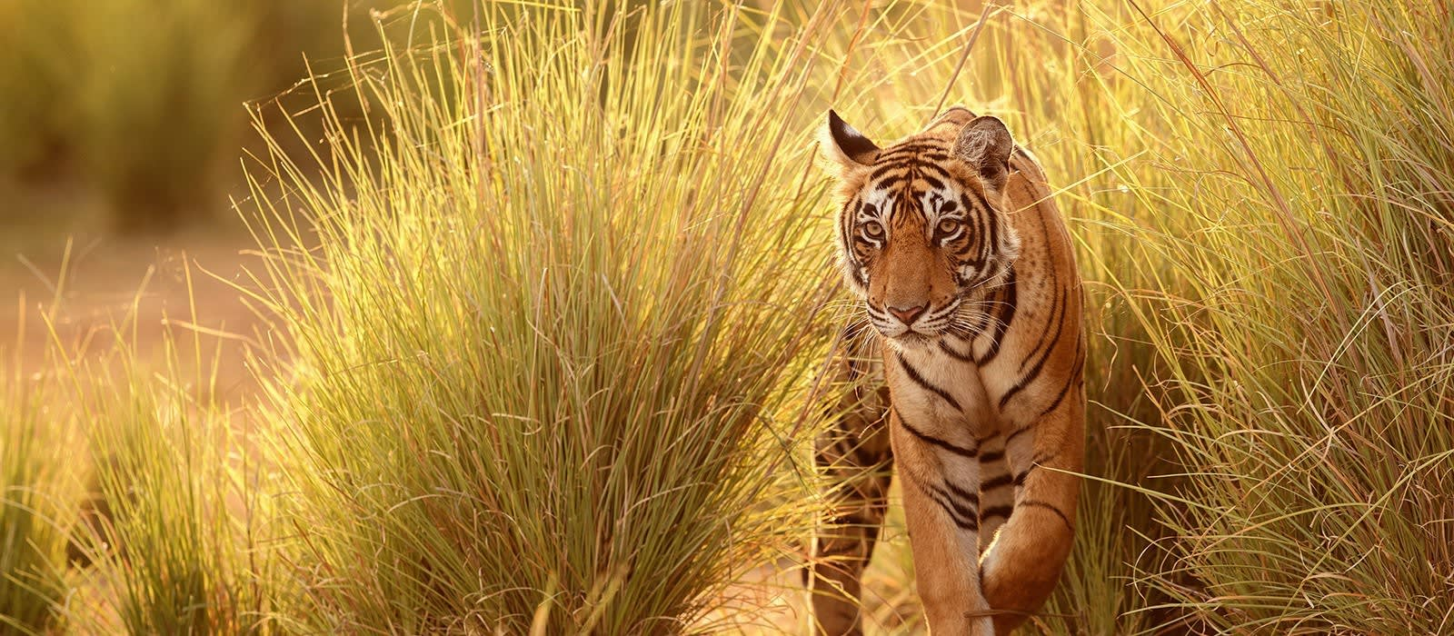 Culture and Wildlife in Central India Tour Trip 1
