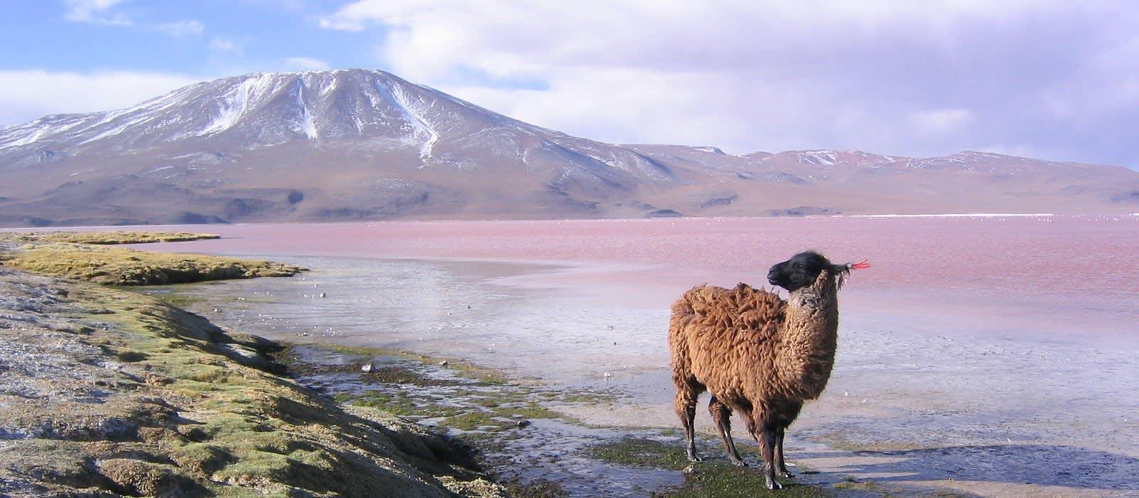 Peru und Bolivien – auf den Spuren vergangener Kulturen Urlaub 1