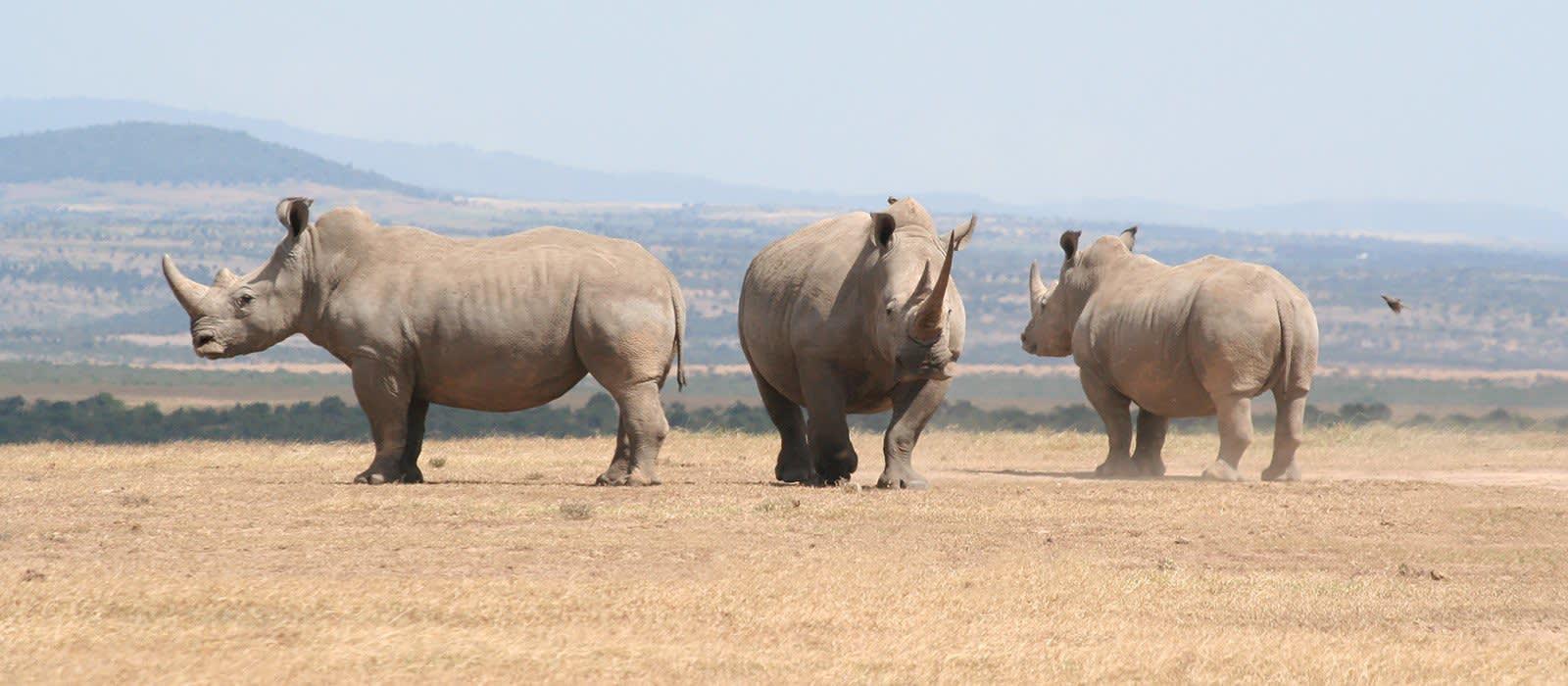 Kenia und Sansibar – Safaris und Strände Urlaub 1