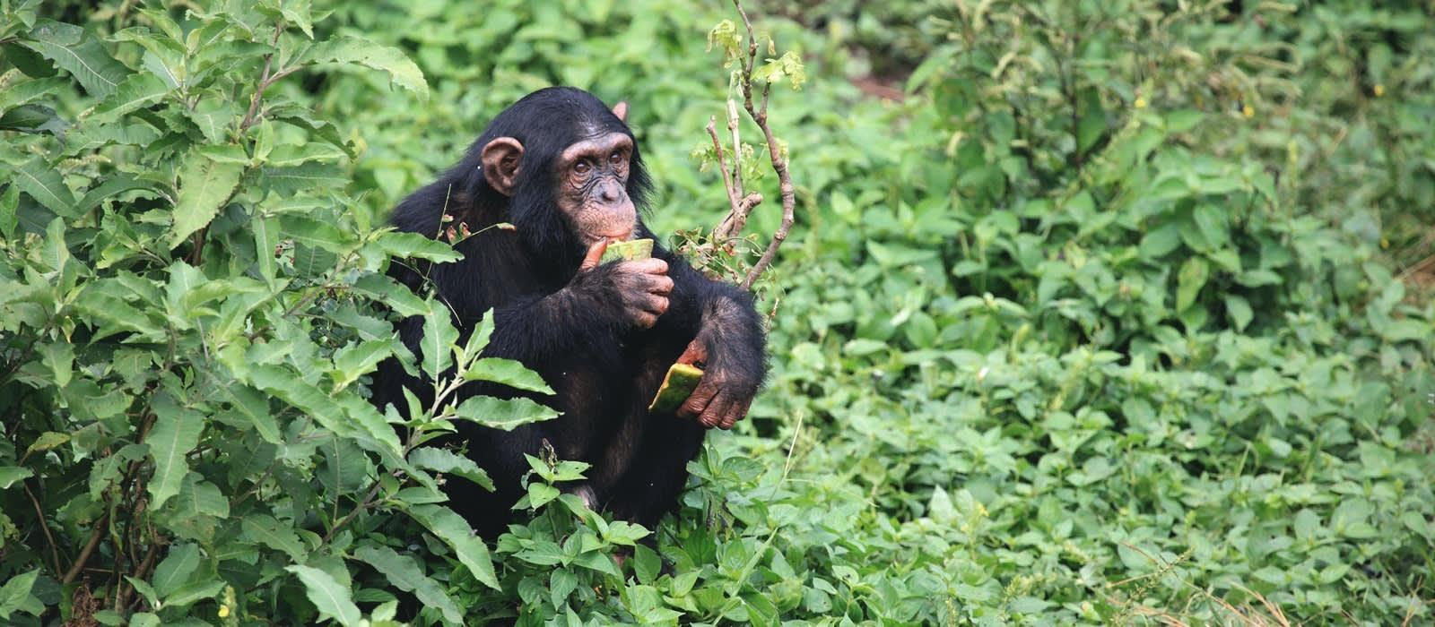 Uganda Safarireise – Primaten und wilde Landschaften Urlaub 1