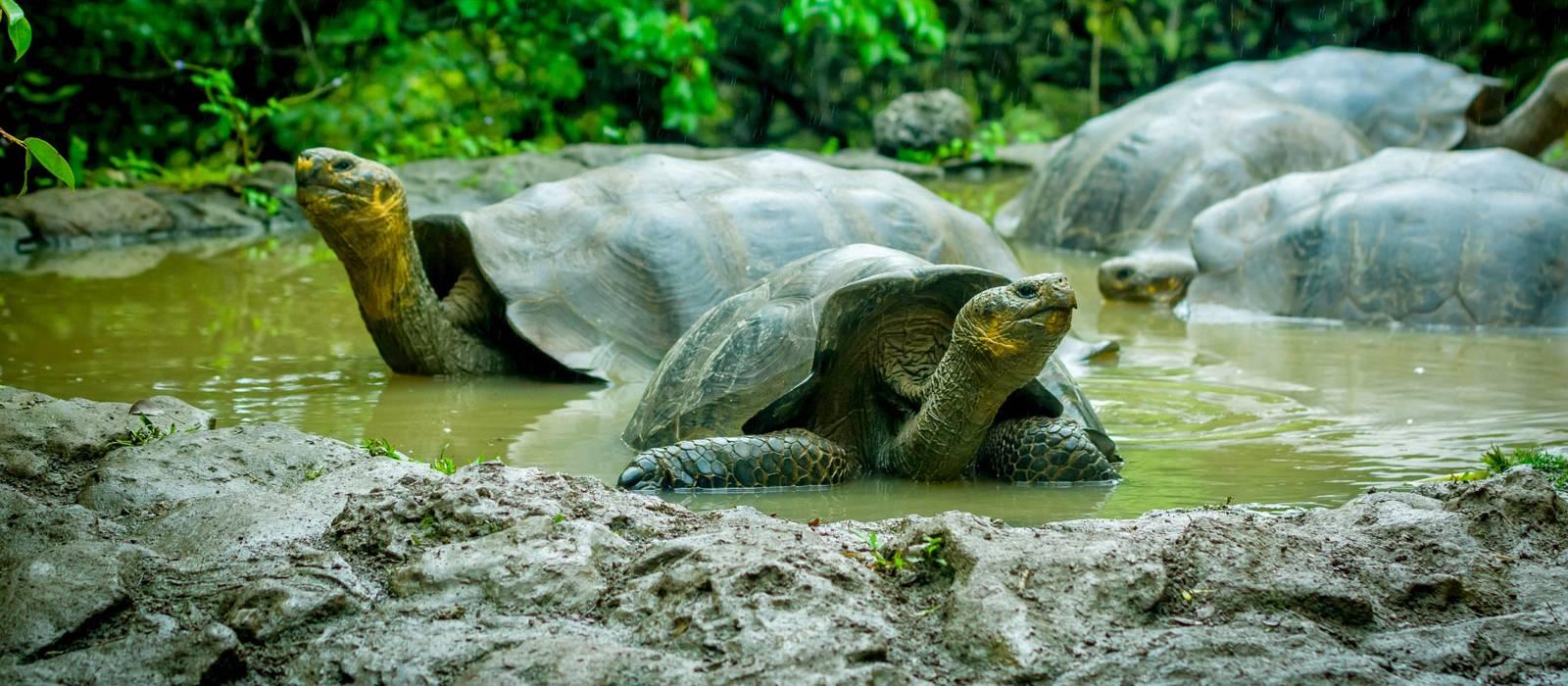 Galapagos: Nature's Secrets Revealed Tour Trip 1