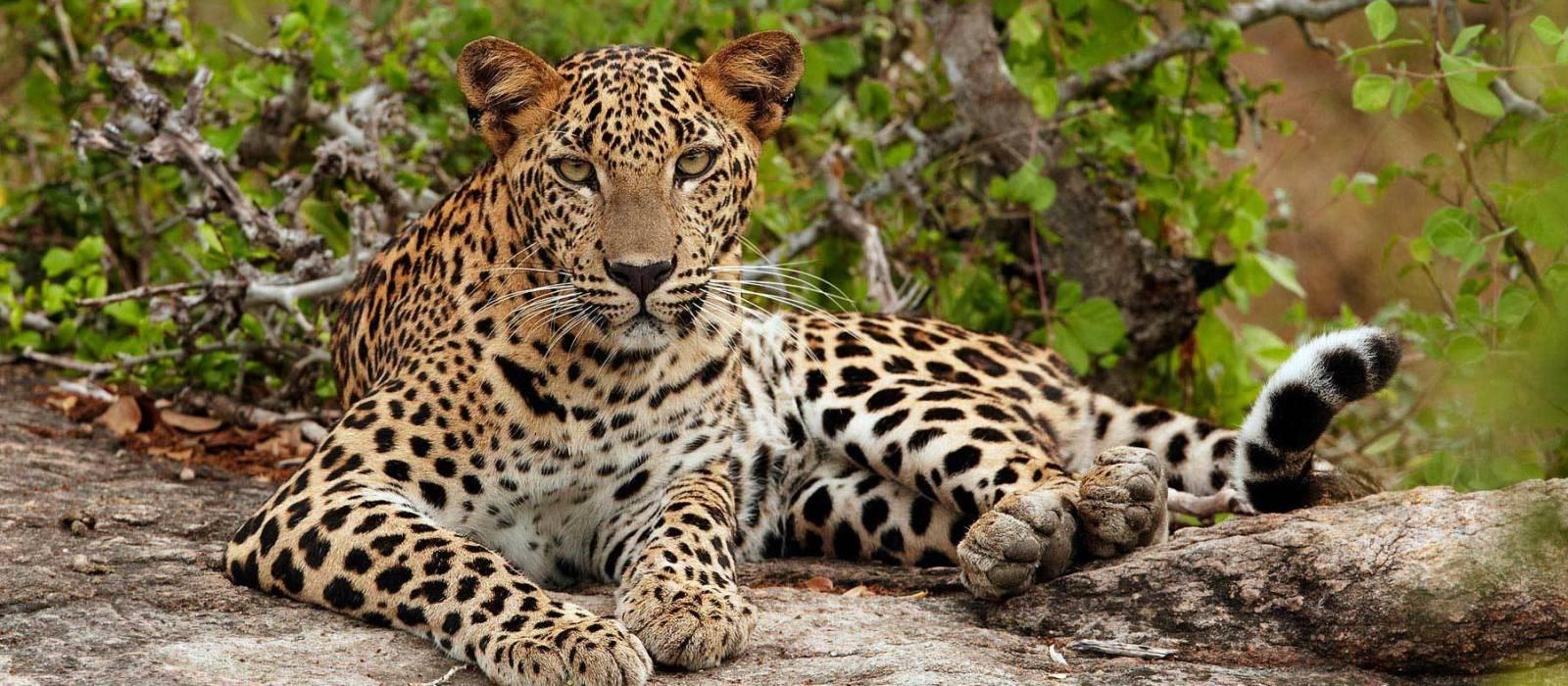 Nordindiens Goldenes Dreieck – Majestätische Paläste und Leoparden Urlaub 1
