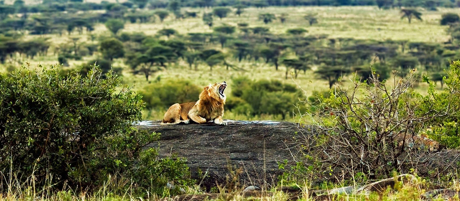 Tansania – vom Kilimanjaro zum Viktoriasee Urlaub 1