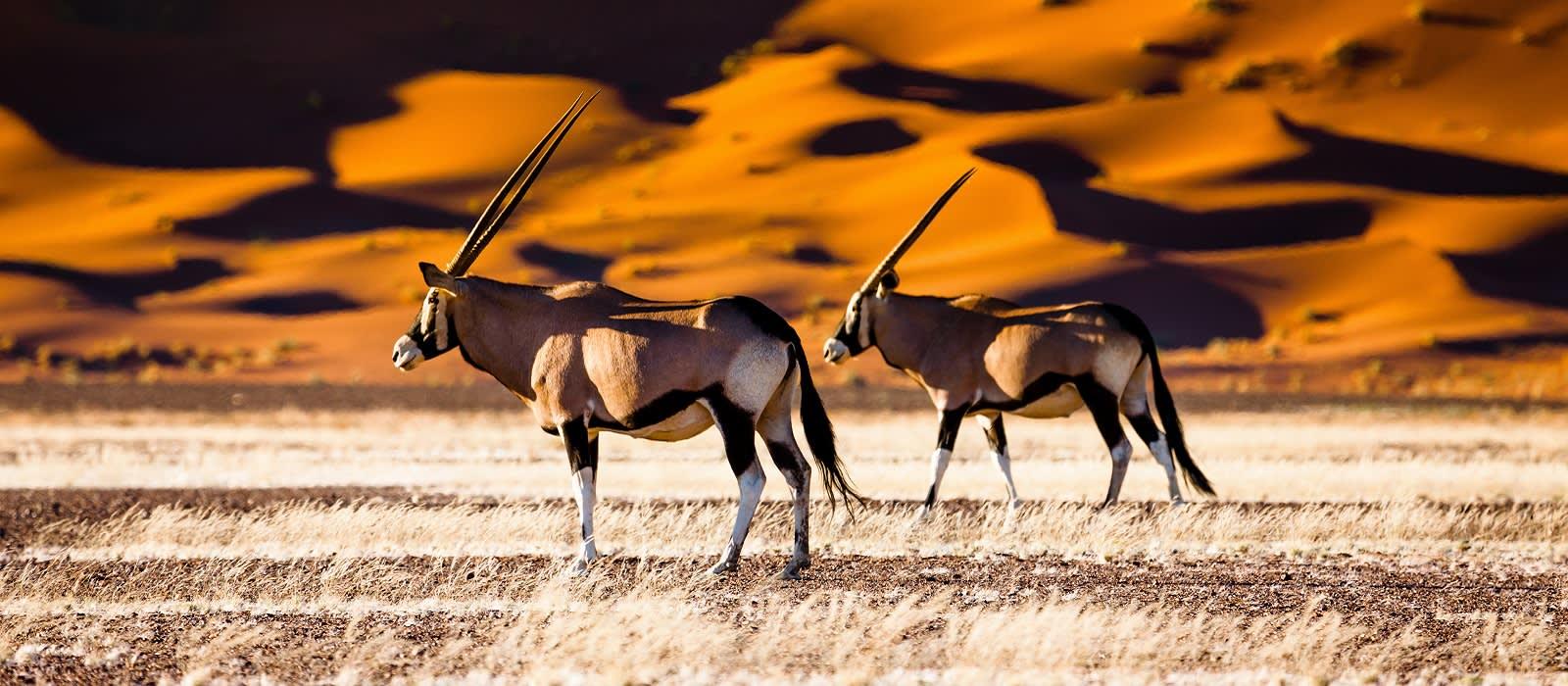 Großer Namibia Roadtrip für die ganze Familie Urlaub 1