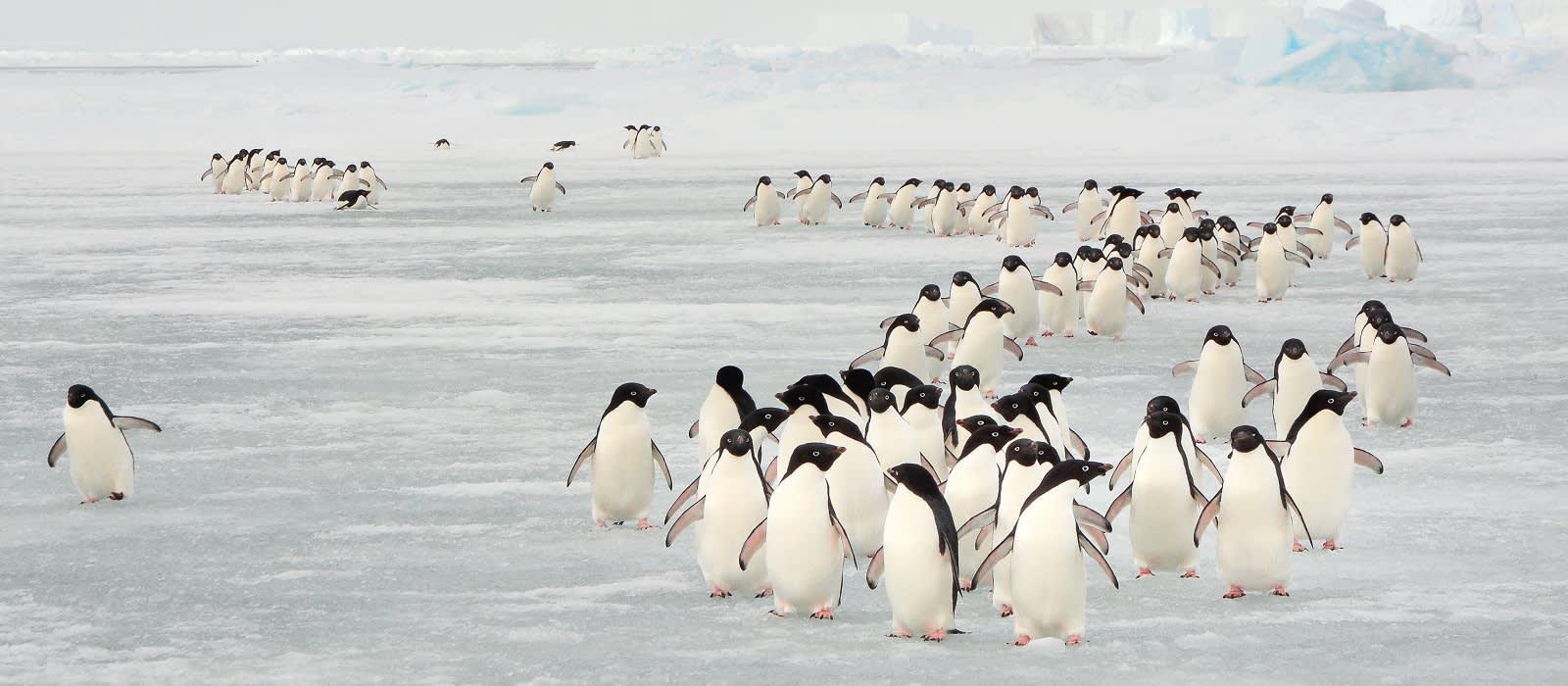 Chile und Antarktis – sagenhafte Schneelandschaften Urlaub 1