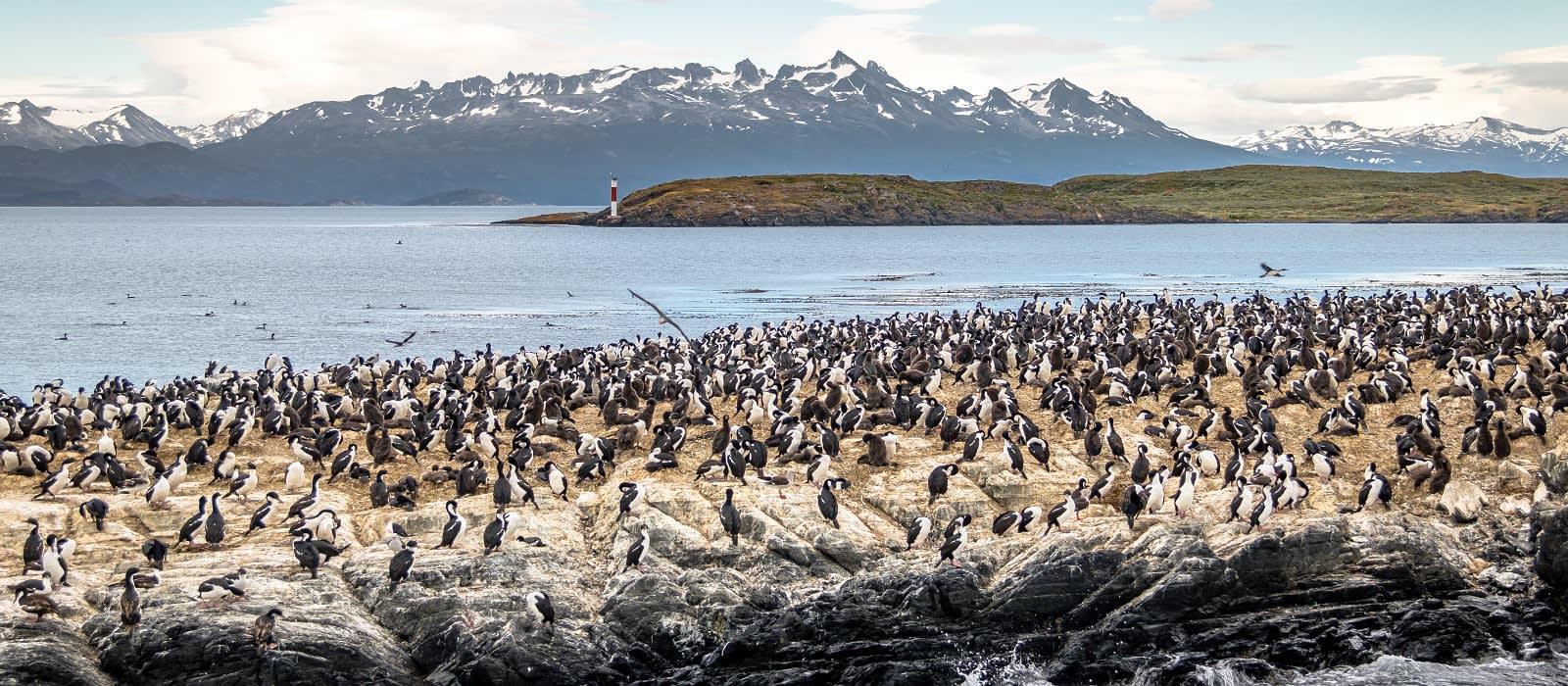 Adventures of the Southern Ocean: Falklands, South Georgia and Antarctica Tour Trip 1