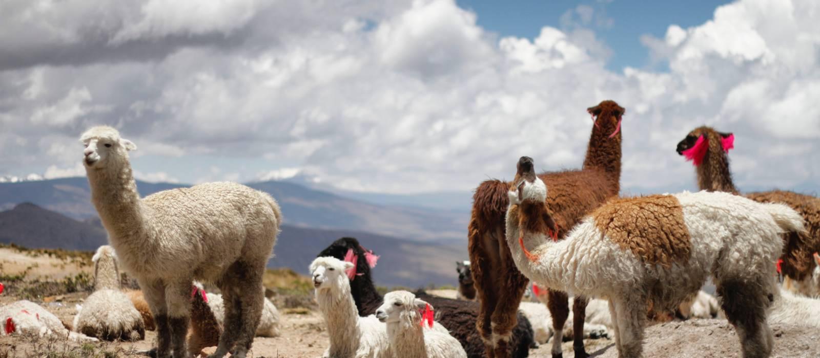 Peru: Highlights of the North Tour Trip 1