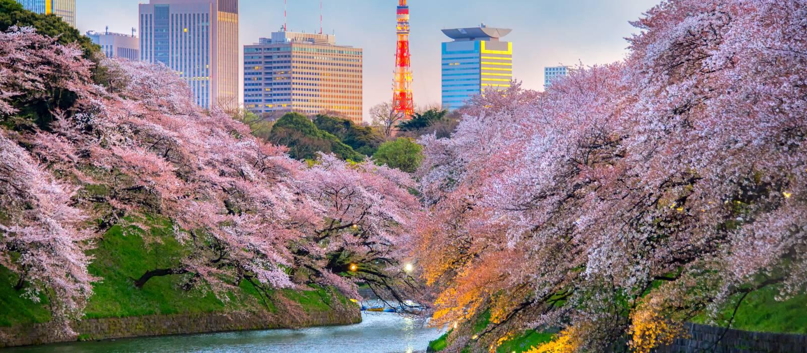 Japan für Einsteiger – Tokio, Fuji und Kyoto Urlaub 1