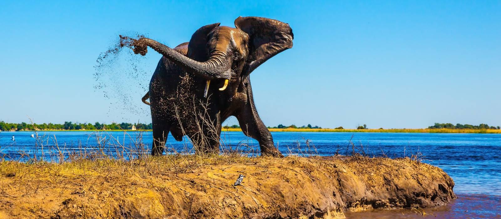 Botswana: Wildlife and Waterfalls Tour Trip 1