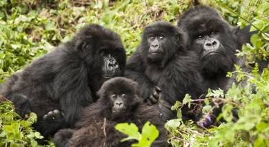 Example private tour: Kenya and Rwanda: Call of the Wild